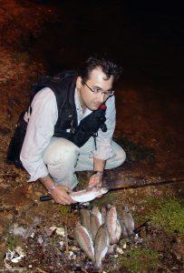Oncorhynchus mykiss | Bahadır Çapar, 2008