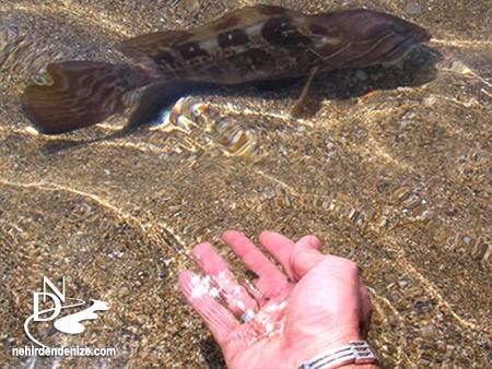 Bahadır Çapar, sürdürülebilir balıkçılığın önemini anlattı. | Nehirden denize doğru