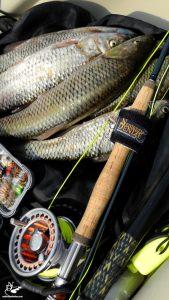 Kayak ve uçurma balıkçılığı, Squalius lepidus | Bahadır Çapar