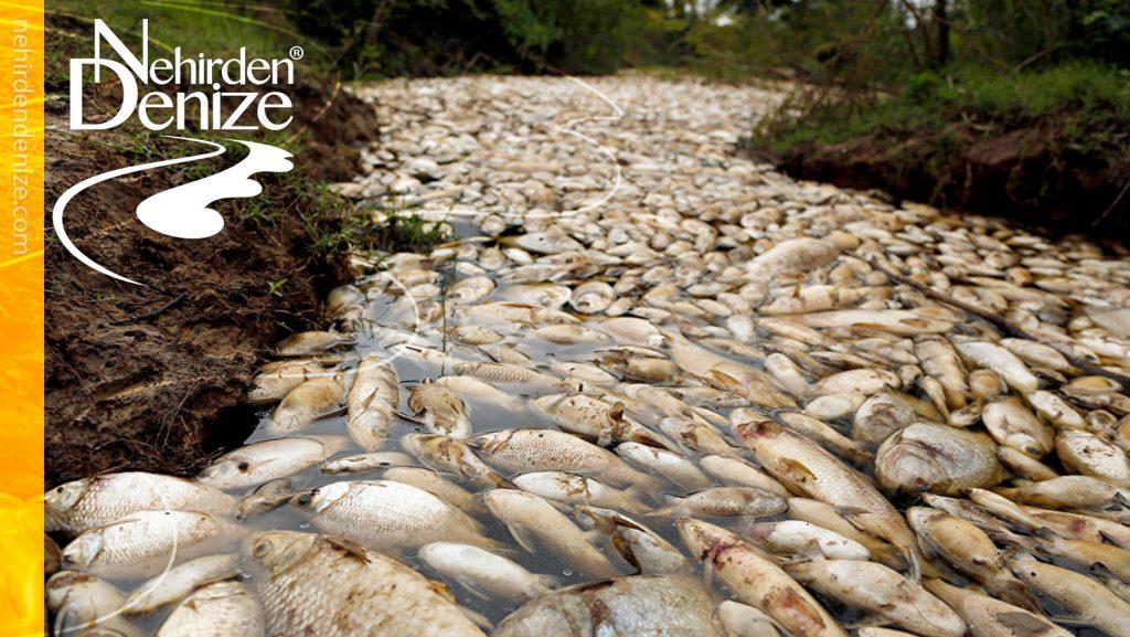 Bir Nehrin Ölümü: Rio Doce