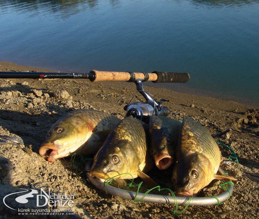 Olta balıkçılığı | Nehirden Denize blogları